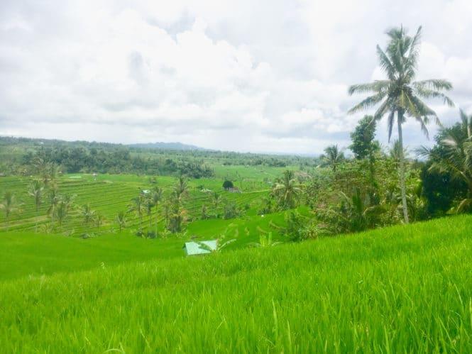 Views of Jatiluwih Bali rice terraces