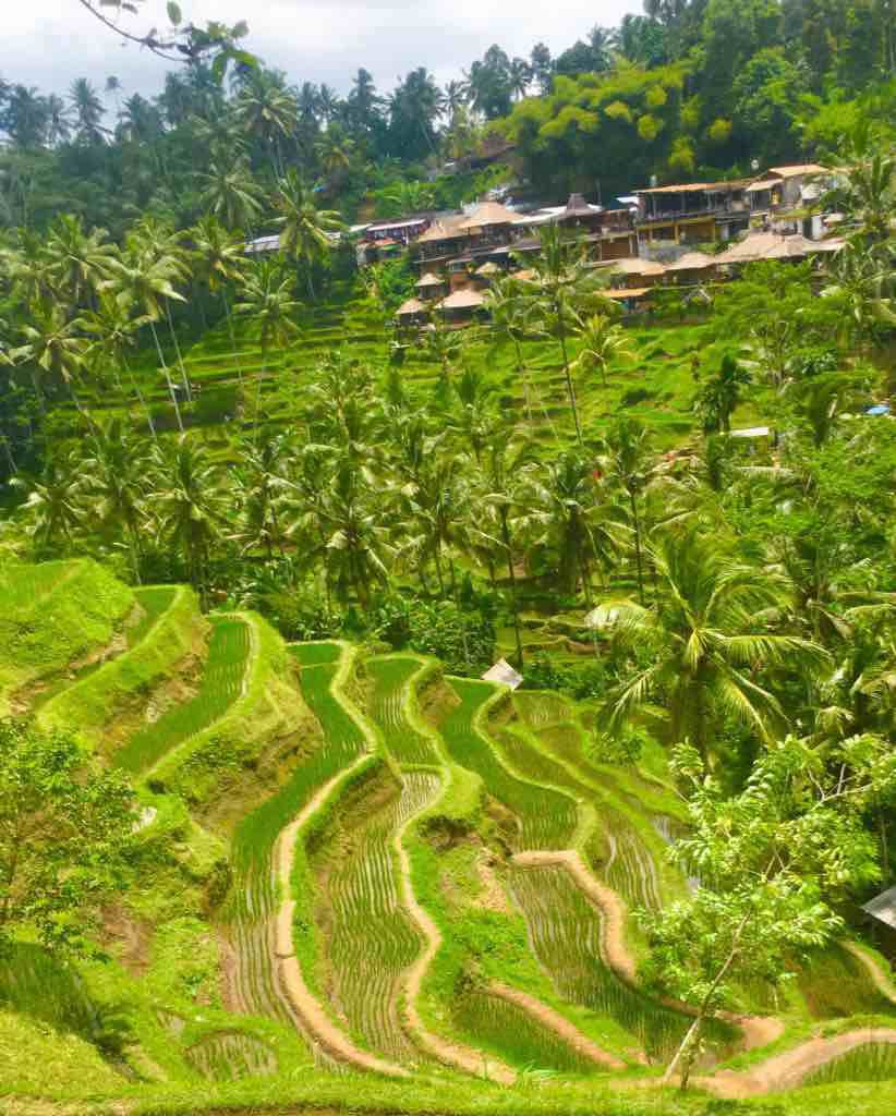 Tegalalang rice terrace near Ubud are one of the best Bali rice terraces
