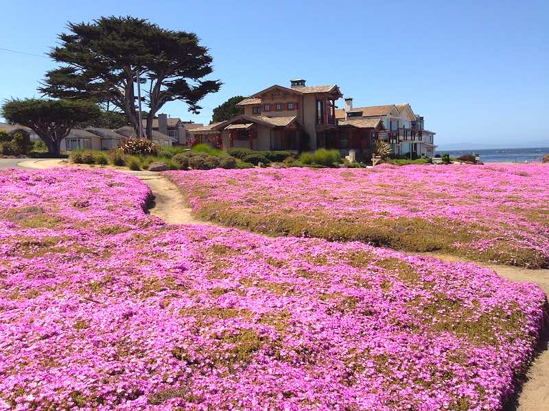Pacific Grove on the scenic drive from san francisco to los angeles San Francisco to Los Angeles road trip I Scenic Drive from San Francisco to Los Angeles by World Travel Connector I Scenic Route from San Francisco to Los Angeles I Los Angeles to San Francisco scenic drive  I San Francisco to Los Angeles drive I san francisco to la I l.a to san francisco I  drive from san francisco to la I san fran to la I la to sf drive I drive from la to san francisco I la to san francisco drive I driving from los angeles to san francisco I drive from la to sf