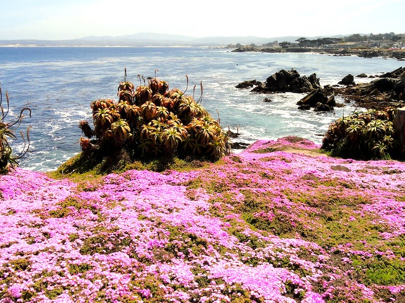 Pacific Grove on my San francisco to los angeles road trip San Francisco to Los Angeles road trip I Scenic Drive from San Francisco to Los Angeles by World Travel Connector I Scenic Route from San Francisco to Los Angeles I Los Angeles to San Francisco scenic drive  I San Francisco to Los Angeles drive I san francisco to la I l.a to san francisco I  drive from san francisco to la I san fran to la I la to sf drive I drive from la to san francisco I la to san francisco drive I driving from los angeles to san francisco I drive from la to sf
