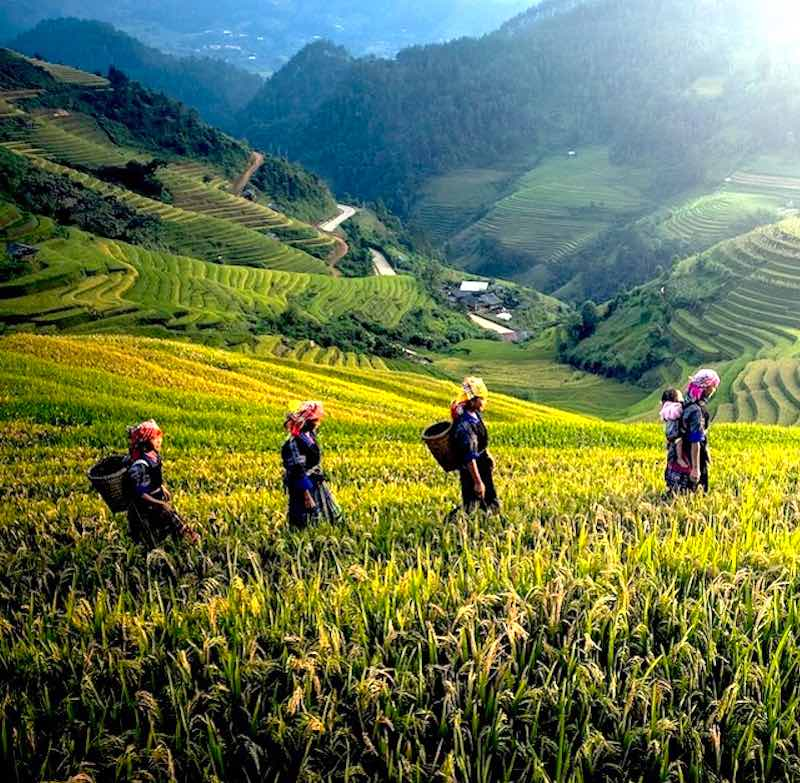 Best time to visit Vietnam varies from one region to another region in Vietnam
