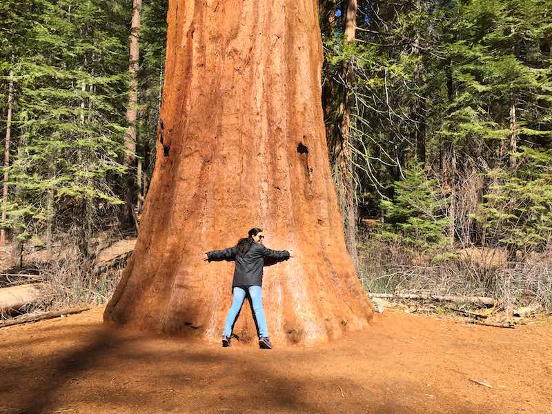 Sequoia National Park in Californiashould be on any USA southwest road trip itinerary