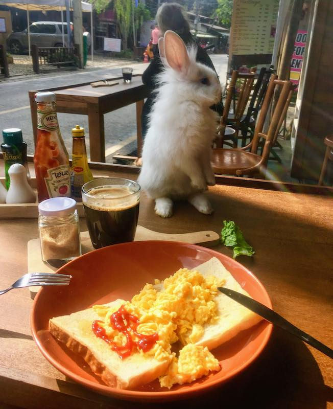 Having breakfast in the rabbit Cafe in Pai is one of the fun things to do in Thailand