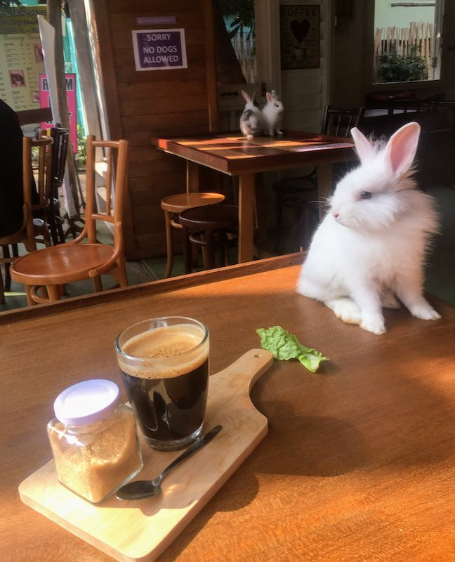 Having a cup of coffee in the Rabbit cafe in Pai is one of the unique things to do in Thailand