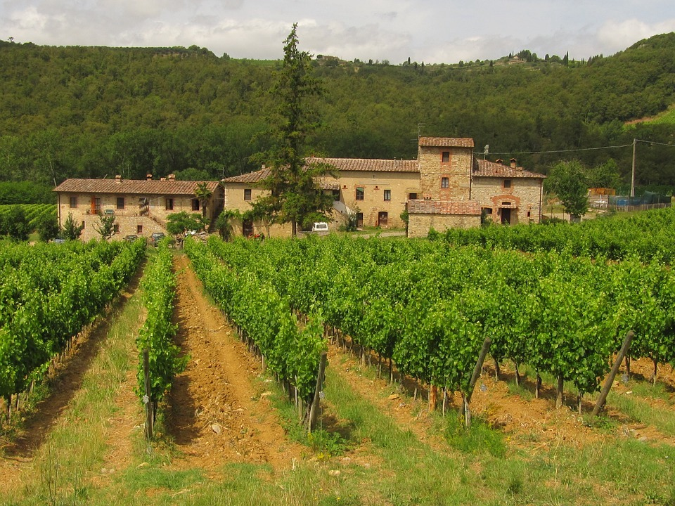 Tuscan vineyard of Chianti wine which a top Italian wine