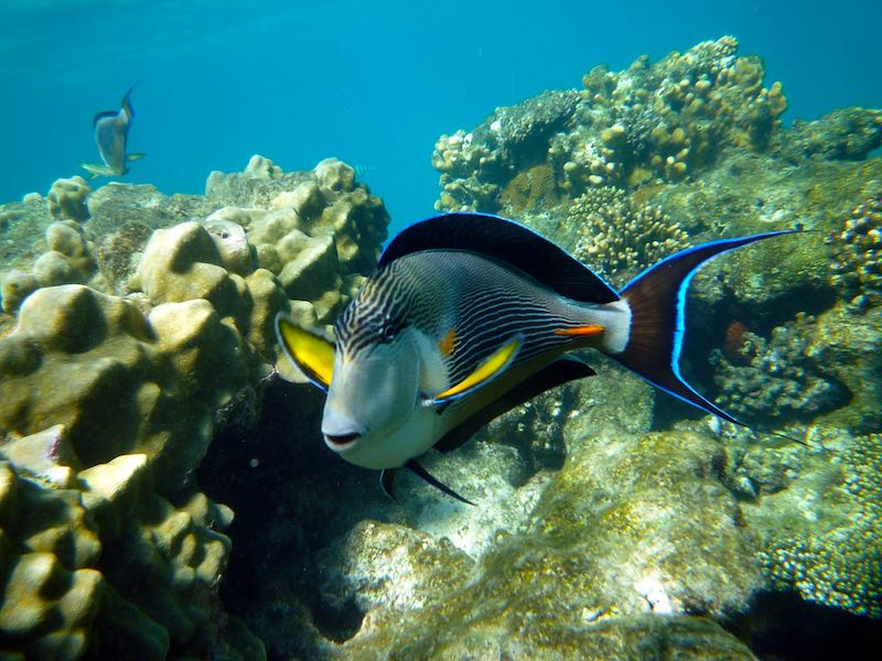Diving in Marsa Alam is one of the best things to do in Egypt