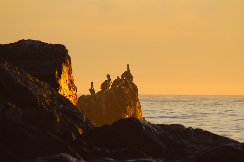 What to do in Big Sur? Explore amazing Limekiln State Park