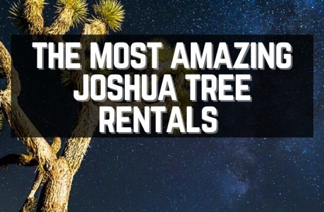 15 Best Joshua Tree rentals for the perfect vacation