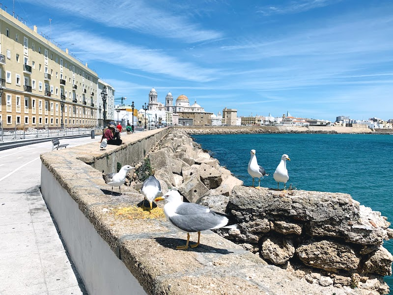 D day trip to Cadiz from Seville is one of the best things to do in Seville area
